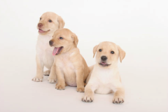 0_dogs-puppy3
