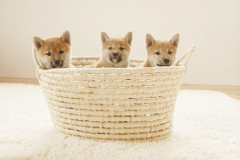 0_dogs-puppy4